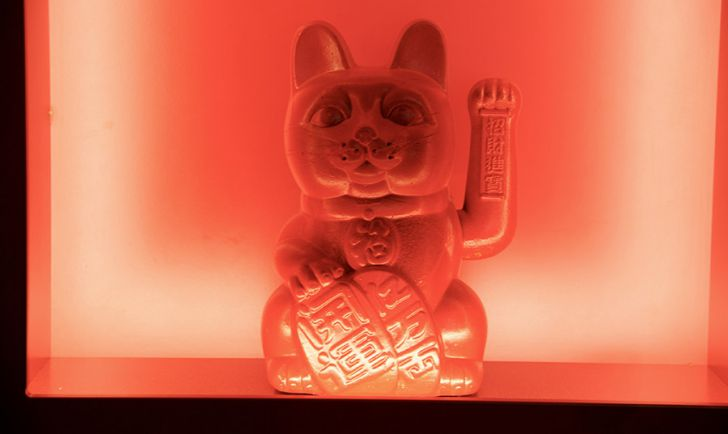 Katze (c) STADTBEKANNT Nohl