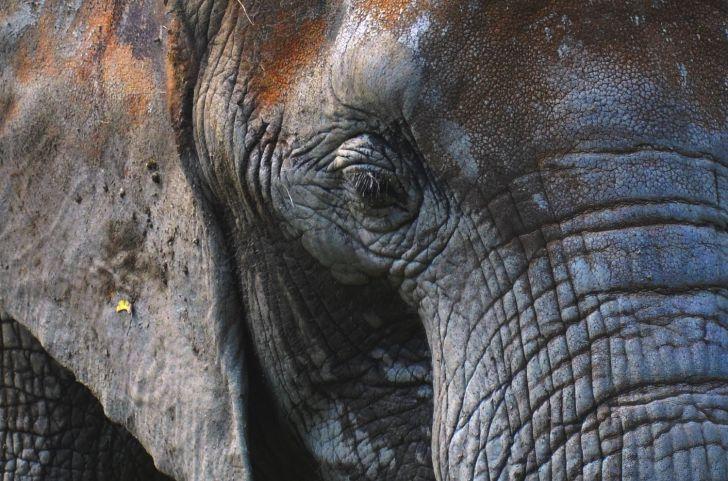 Elefant Auge (c) Mautner stadtbekannt.at
