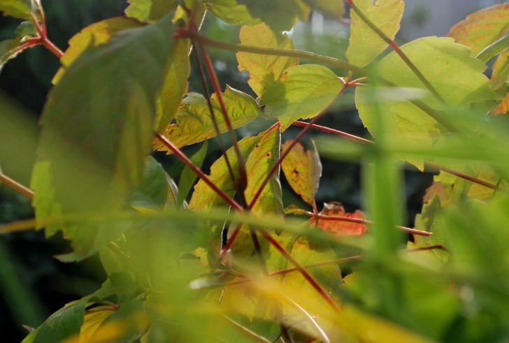 Herbst Blätter (c) garteling