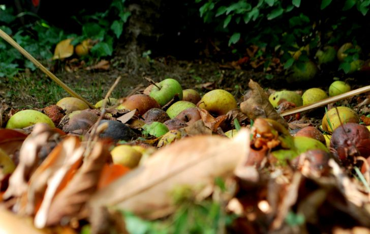 Herbst Laub (c) garteling