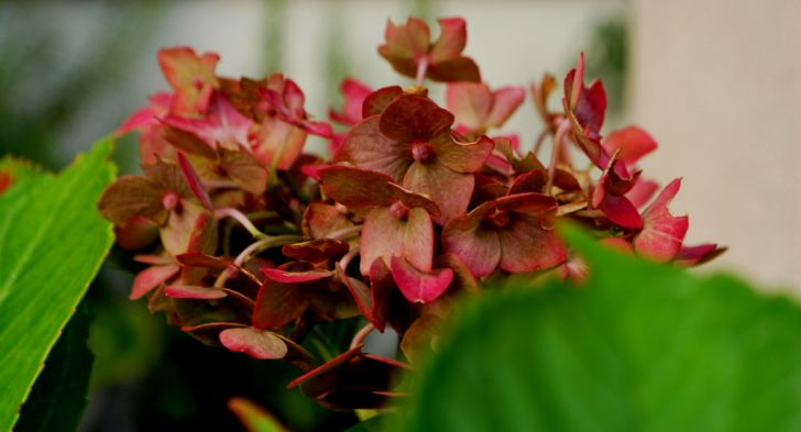 Herbst (c) garteling