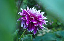 Herbst Blume (c) garteling
