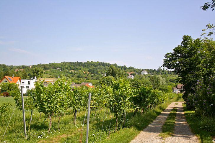 Strebersdorf Bisamberg (c) STADTBEKANNT Nohl