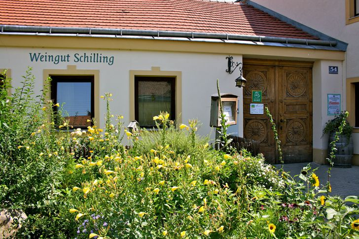 Strebersdorf Schilling (c) STADTBEKANNT