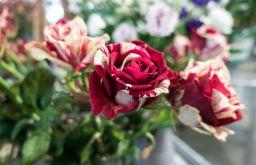 Blumen rot weiße Rosen (c) STADTBEKANNT