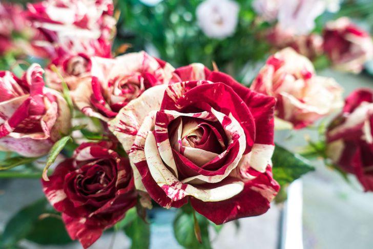 Blumen Rosen (c) STADTBEKANNT