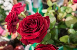 Blumen rote Rosen (c) STADTBEKANNT