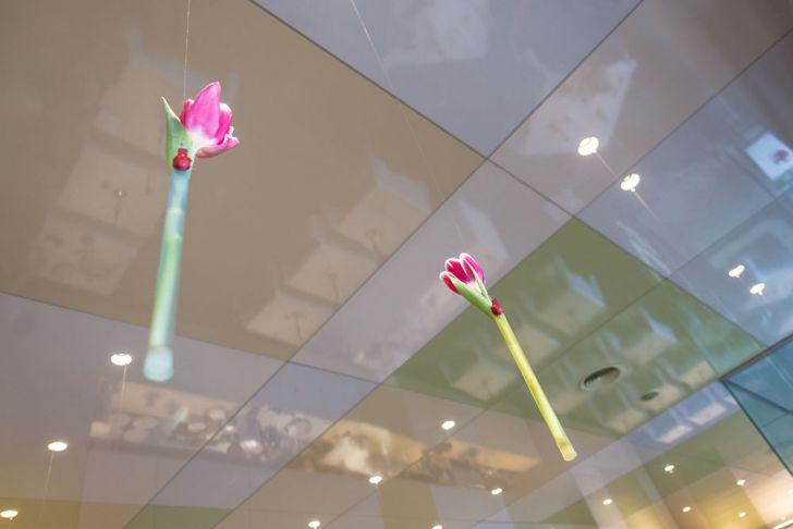 L421 Blumen (c) STADTBEKANNT