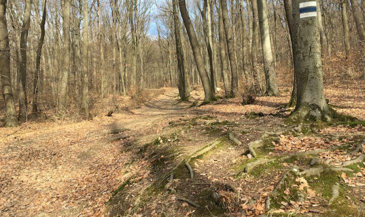 Laufstrecke 14 - Bergauf entlang der NÖ Grenze Richtung Hameau (c) STADTBEKANNT