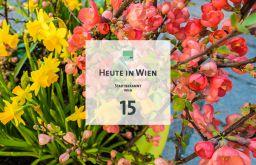 15 Tagestipp Blumen (c) STADTBEKANNT
