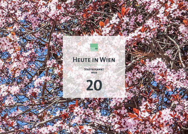 20 Tagestipp Kirschenhain (c) STADTBEKANNT