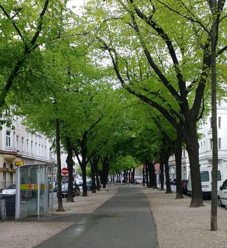 Markgraf-Rüdiger-Straße (c) STADTBEKANNT Kantner