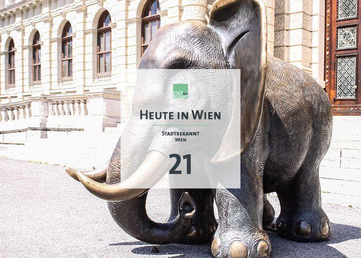21 Tagestipp Elefant NHM (c) STADTBEKANNT