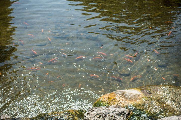 Setagayapark Fische (c) STADTBEKANNT