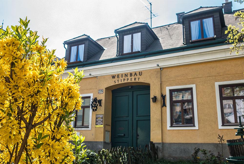 Weinbau Stippert (c) STADTBEKANNT