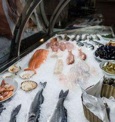 Goldfisch Fische (c) STADTBEKANNT