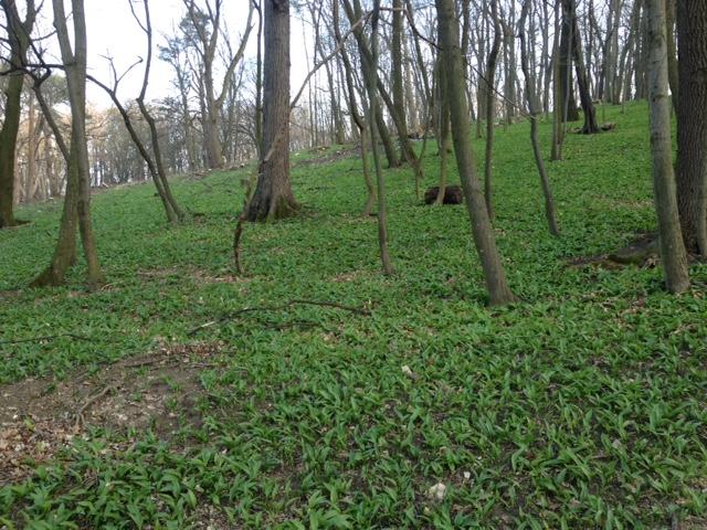 Pötzleinsdorfer Schlosspark (c) STADTBEKANNT Hofinger