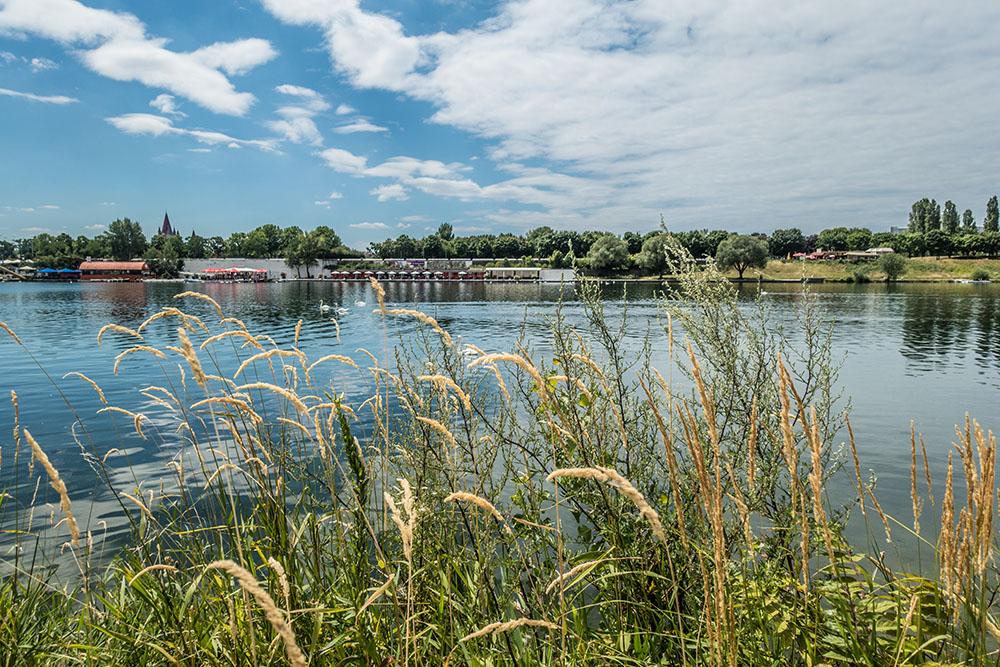Donau Schilf (c) STADTBEKANNT