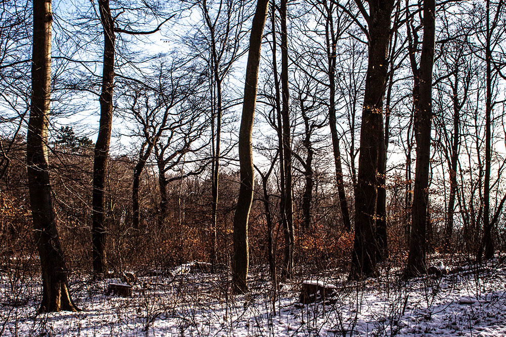 Wald Bäume (c) STADTBEKANNT